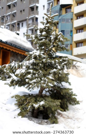Christmas evergreen spruce tree with fresh snow in an urban landscape. - stock photo