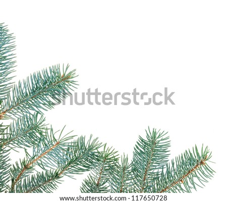 Christmas fir branches framework, isolated on white - stock photo