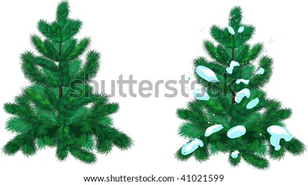 christmas fir-tree with snow and clear