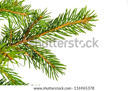 Christmas green spruce branch isolated on white background - stock photo