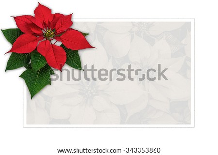 Christmas greeting card with copy space, poinsettia decoration - stock photo