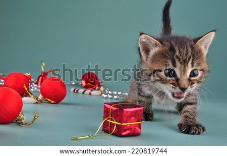Christmas group portrait of little kitten with holiday decorations - stock photo