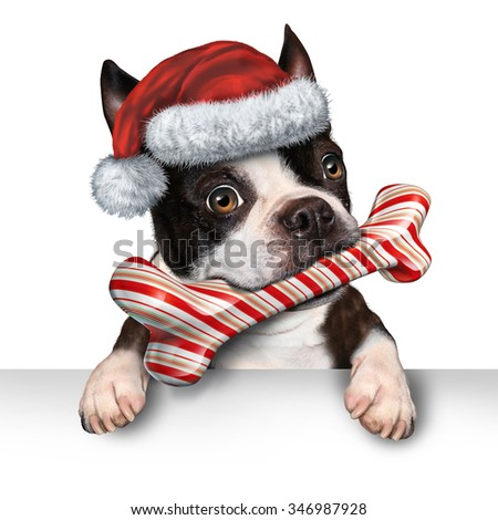 Christmas holiday dog pet sign for veterinary medicine festive winter advertising and marketing message with a cute dog biting into a bone made of candy cane with a santa hat hanging on a placard. - stock photo