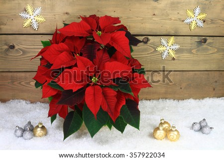 Christmas, Holidays Season Typical Decoration. Flower Poinsettia, Decorative Silver and Gold Colors Balls over white snow in front of wooden wall with silver and gold snow flakes shape stars