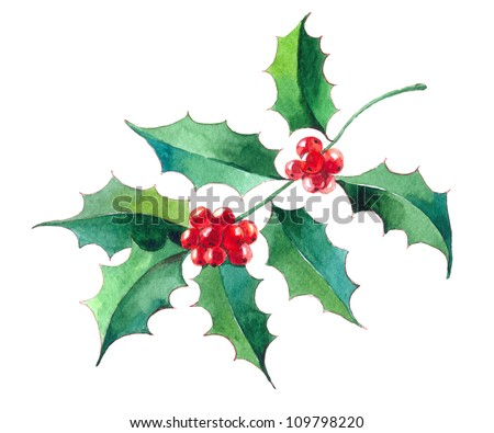 Christmas Holly branch with berry.watercolor illustration - stock photo