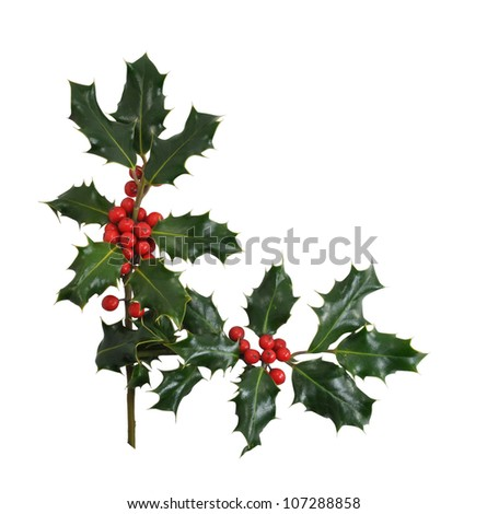 Christmas Holly branches, leaves and berries in a corner or border design item isolated on a white background. - stock photo