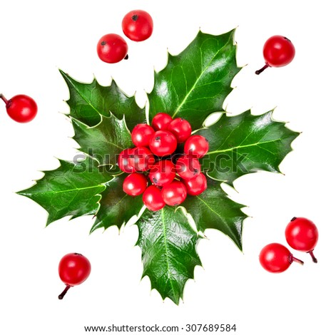 christmas holly iIlex with berries isolated on white background - stock photo
