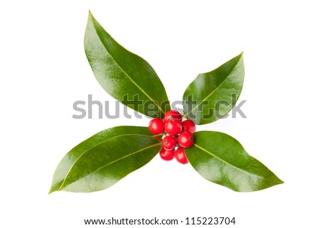 Christmas holly (Ilex) with berries, isolated on white - stock photo