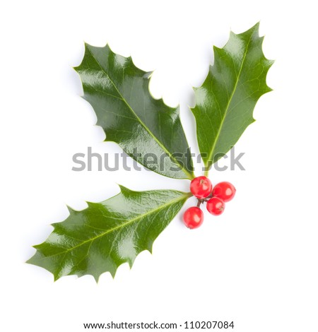 Christmas Holly (Ilex) with red berries, isolated on white - stock photo