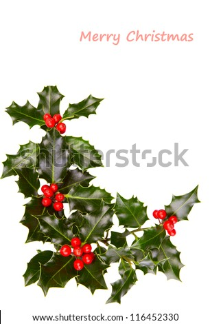 Christmas holly with red berries - stock photo