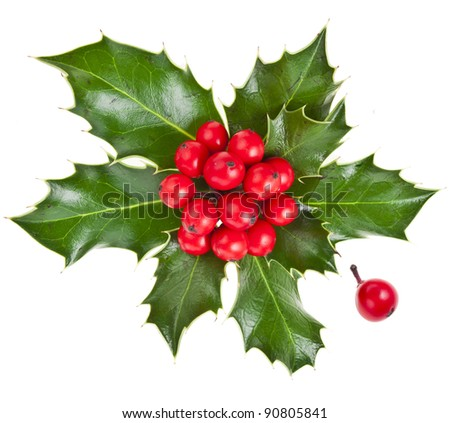 christmas ilex holly with red berries decoration isolated on white - stock photo