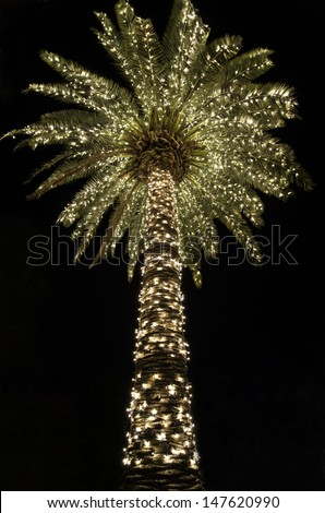 Christmas in Charleston South Carolina with a Palmetto tree lit up at night - stock photo