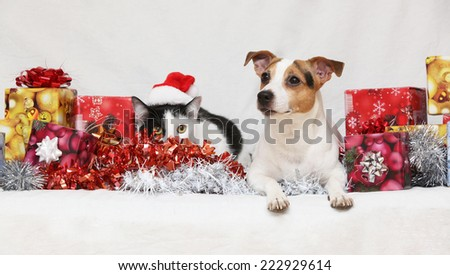 Christmas Jack Rusell terrier with a cat on white background - stock photo