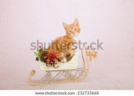 Christmas kitten sitting inside decorated Christmas sleigh on light pink background  - stock photo