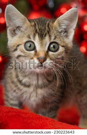 Christmas kitten with red christmas decoration
