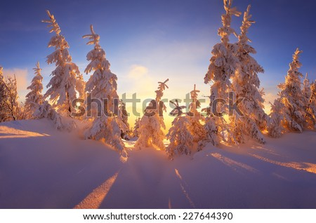 Christmas landscape. Fabulous winter forest with snow-covered trees. Beautiful light of the setting sun - stock photo