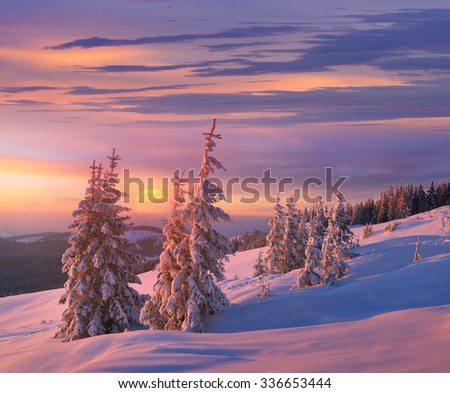Christmas landscape. Spruce forest in winter. Beautiful light at sunset - stock photo