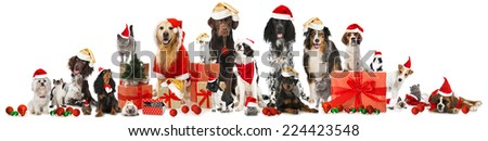 Christmas pets - stock photo