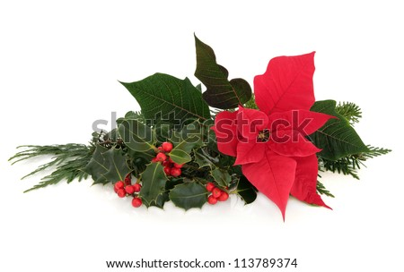 Christmas poinsettia flower table decoration with holly, ivy, spruce pine and cedar cypress leaf sprigs over white background. - stock photo