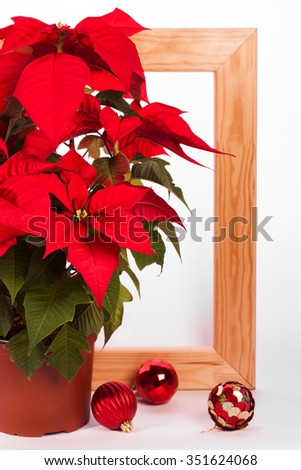 Christmas poinsettia with balls and wooden frame