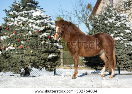 Christmas portrait pony for Christmas tree with decorations - stock photo