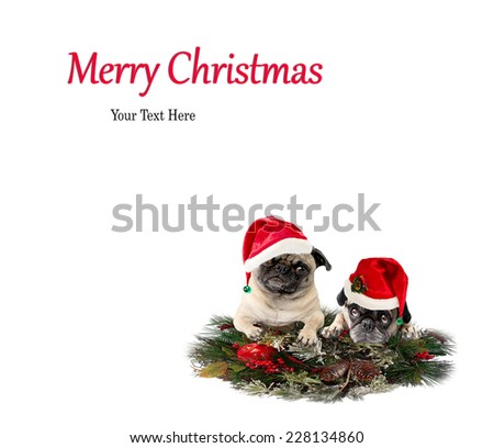 Christmas Pug Dog Card, Merry Christmas, Happy Holidays - stock photo