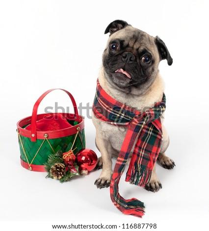 Christmas Pug on White Background - stock photo