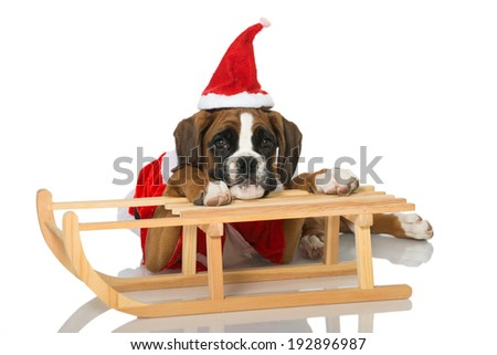 Christmas puppy isolated on white