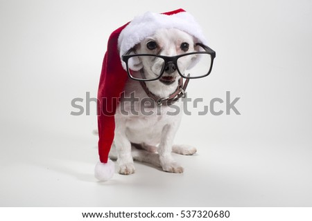Christmas Puppy Maltese puppy dressed as Santa claus.