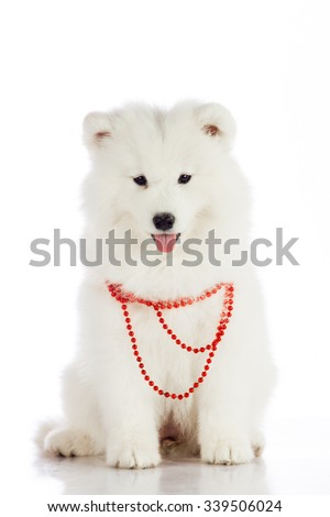 Christmas puppy.  Merry christmas - stock photo