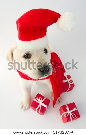 Christmas puppy - portrait of cute labrador puppy in Santa hat - stock photo