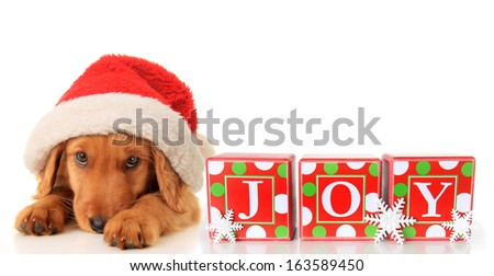 Christmas puppy wearing a Santa hat and JOY ornament.  - stock photo