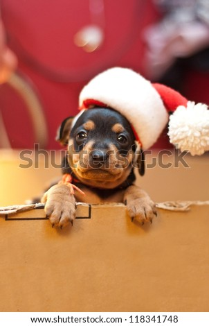 Christmas  puppy with Santa hat - stock photo