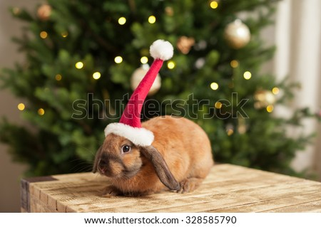 Christmas Rabbit wearing Santa Claus red Hat near Christmas Tree - stock photo