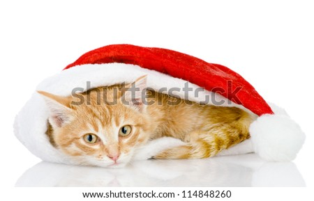 Christmas Santa cat. isolated on white background - stock photo