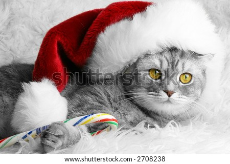 Christmas Santa cat with candy - stock photo
