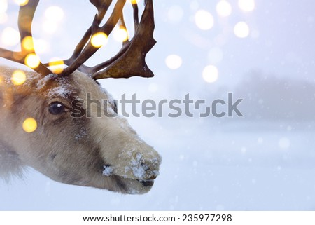 Christmas Santa Claus deer  - stock photo