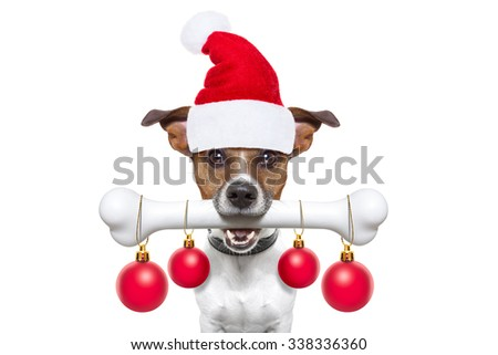 christmas santa claus dog holding a big bone with mouth decoration xmas balls hanging, isolated on white background - stock photo