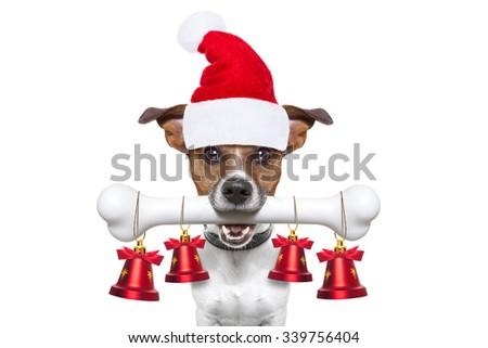 christmas santa claus dog holding a big bone with mouth decoration xmas bells hanging, isolated on white background - stock photo