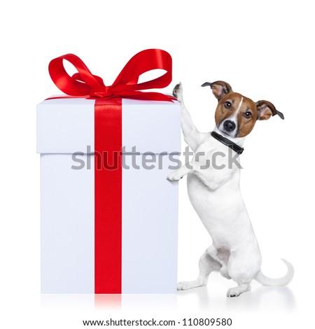 christmas santa dog with a gift - stock photo
