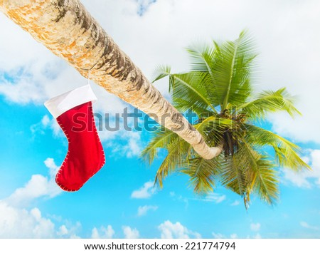 Christmas sock on palm tree at exotic tropical beach against blue sky. Holiday concept for New Years Cards