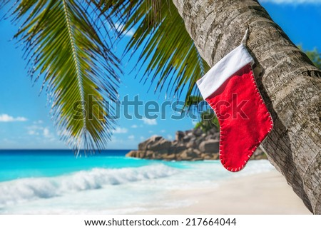 Christmas sock on palm tree at exotic tropical beach. Holiday concept for New Years Cards. Praslin, Anse Georgette, Seychelles - stock photo