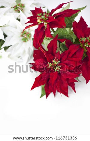 Christmas stars on a white background