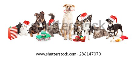 Christmas theme image of a large group of cats and dogs together - stock photo