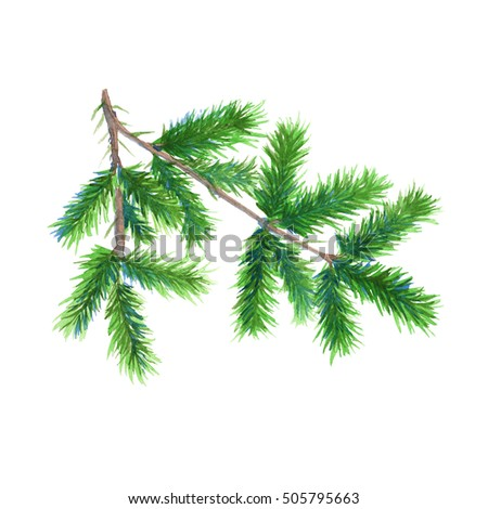 Christmas tree branch. Isolated on a white background. Watercolor Christmas illustration.