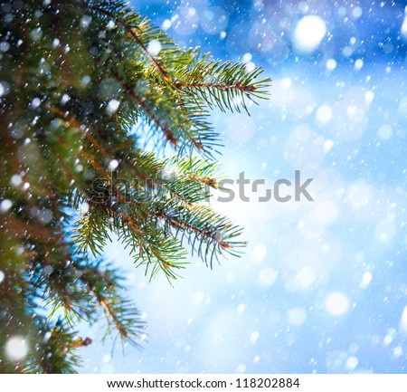 Christmas tree branch on a blue background - stock photo