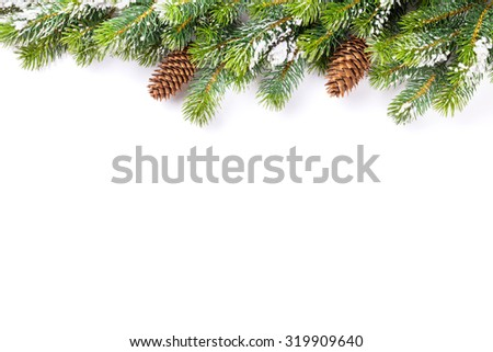 Christmas tree branch with snow and pine cones. Isolated on white background with copy space - stock photo