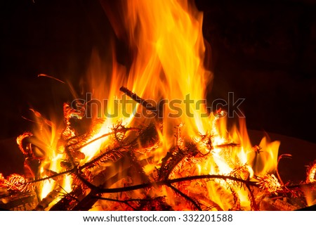 christmas tree burning in the fire bowl - stock photo