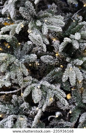 Christmas tree Christmas tree is a decorated tree, usually an evergreen conifer such as spruce, pine, or fir associated with the celebration of Christmas. - stock photo