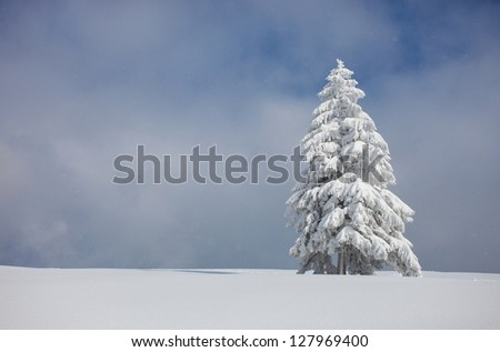 christmas tree covered with snow - stock photo